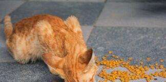 Najlepsza karma dla kota jest obok opieki weterynaryjnej jednym z najważniejszych wydatków na opiekę nad kotami. Należy również pamiętać, że odpowiednia dieta może wyeliminować lub opóźnić wydatki weterynaryjne w przypadku niektórych poważnych schorzeń.