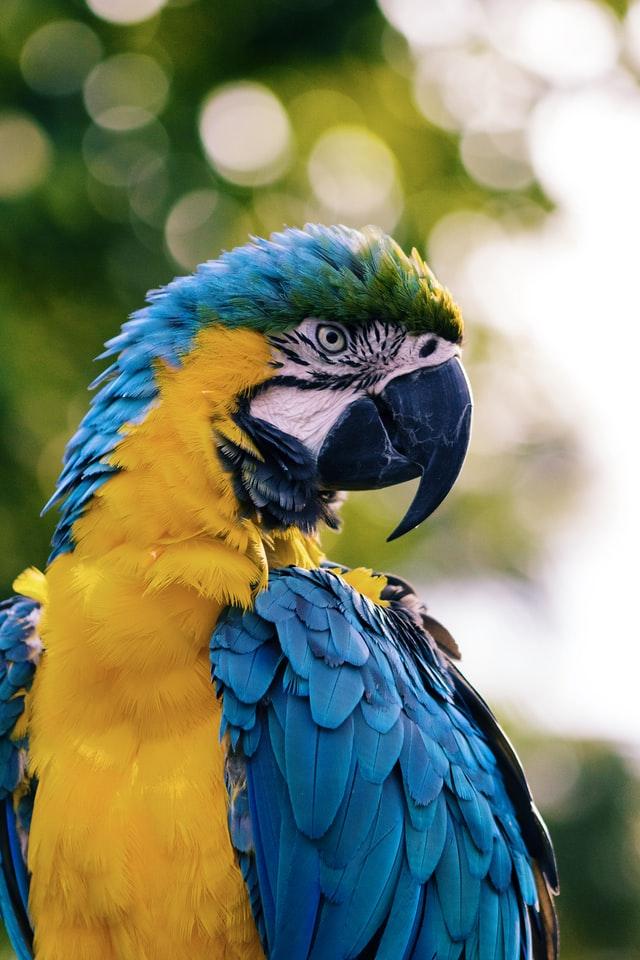 Duże ptaki powinny mieć dostęp do ogrodzonej woliery, w której będą mogły odbywać długie loty - pomoże im to w zachowaniu zdrowia i dobrej kondycji.