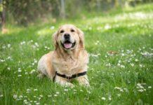 Spełnia się twoje dziecięce marzenie i postanowiłeś adoptować psa, pojawia się jednak pytanie jak wybrać psa? To nie łatwe zagadnienie, dlatego stworzyliśmy poradnik po typach charakterów różnych ras psów.