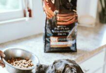 Jaka jest odpowiednia karma dla psa? Prawidłowe żywienie to jedna z podstawowych potrzeb psów. Dobra dieta to jeden z najlepszych sposobów na utrzymanie zdrowia psa.