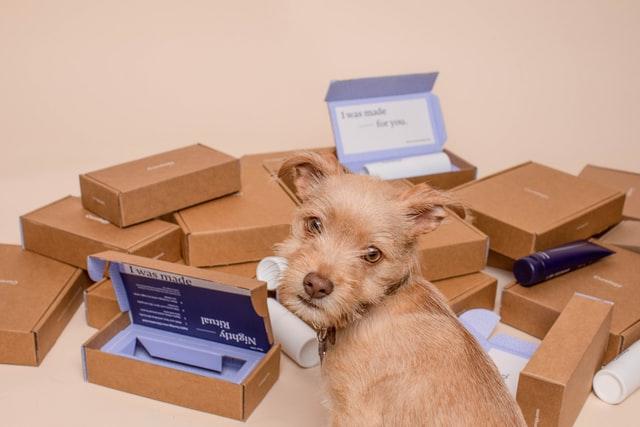 Pies szukający smakołyków w pudełkach - to świetna zabawa dla psa każdej wielkości!
