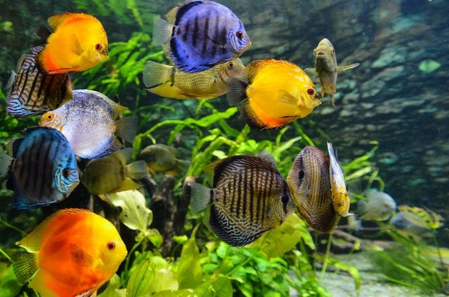 Jeśli decydujesz się na rybki akwariowemusisz wiedzieć, że nie są to zwierzęta bezobsługowe, tak samo jak ptaki domowe. Może się wydawać, że tak jest, ale to niestety bardzo błędne przekonanie.