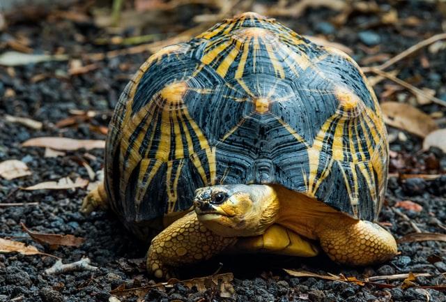 Żółwie bardzo różnią się między sobą/. O ile jedne można puszczać do ogrodu, by poszalały w trawie tak inne potrzebują piasku i gorących lamp.