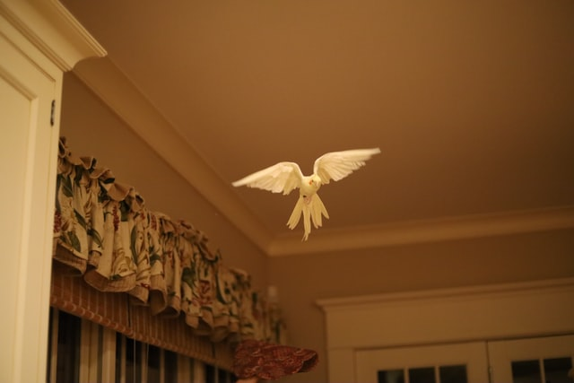 Ptaki domowe muszą mieć dostęp do otwartej przestrzeni, w której będą mogły latać.