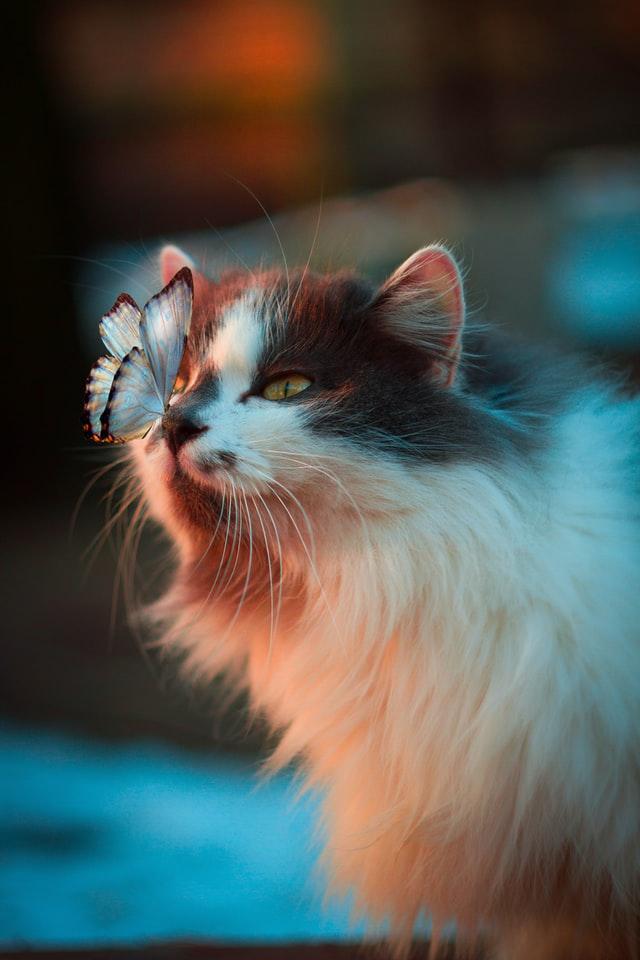 Kupno kota rasowego ma swoje wady i zalety.