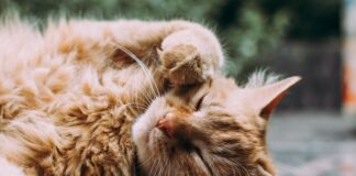 Jeśli nie bardzo lubisz psy, lub nie są to zwierzęta dla ciebie, może się okazać, że jesteś kociarzem – w naszym poradniku dowiesz się jak wybrać kota dla siebie.