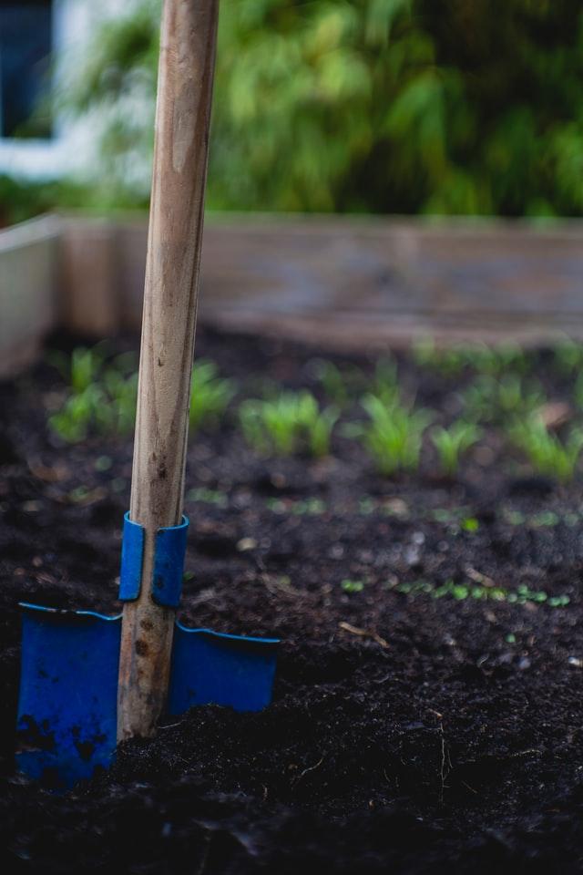 Kompost świetnie nadaje się do użyźniania ogrodu.