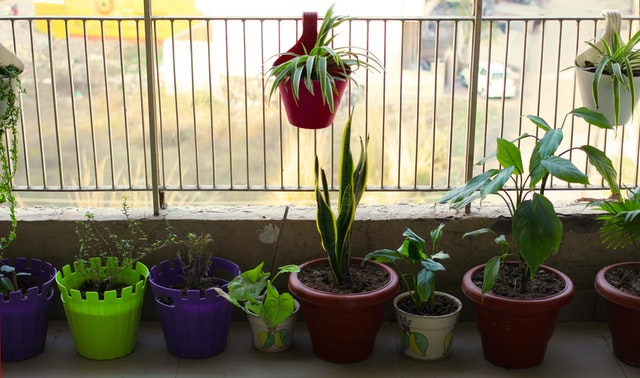 Każdy balkon nadaje się do prowadzenia ogrodu - ale nie na każdym będą w stanie rosnąć te same rośliny.