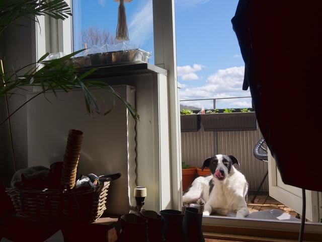 Ogród na balkonie często musi dzielić przestrzeń z domownikami.