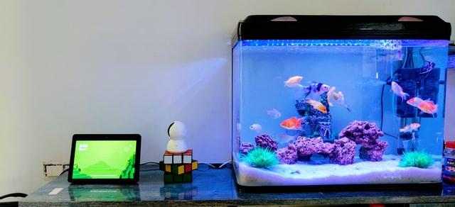 D=Odpowiednie akwarium powinno być dopasowane do rozmiaru rybek wewnatrz.