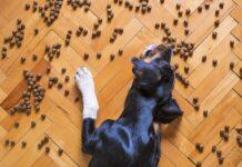 Jak prawidłowo odżywiać psa