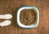 Odpowiednie odżywianie psa dla jego zdrowia